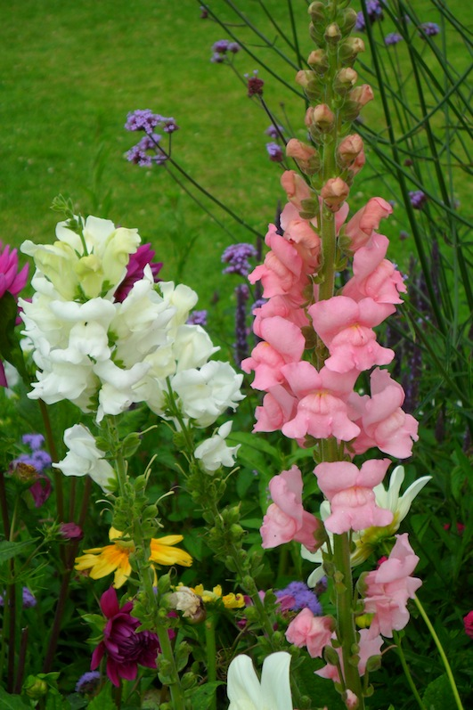 Colourful flowers - Case study brief dynamic therapy